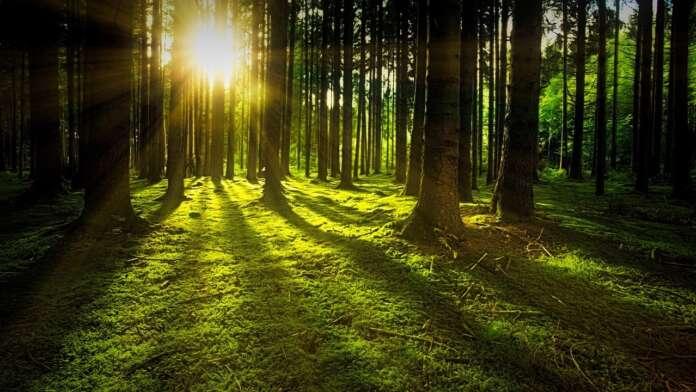 forestation